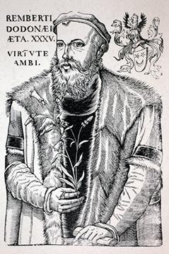 tulp Rembert Dodoens